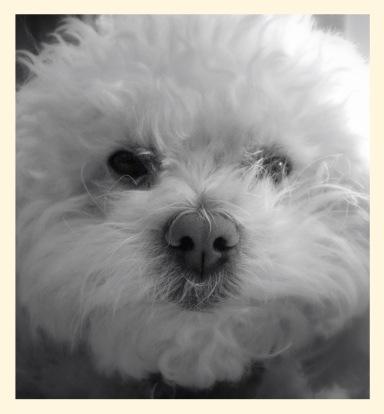 Sammy my sweet Poodle...